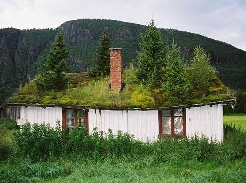 Green roofs…..