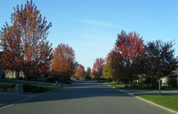 Meadow Drive…..
