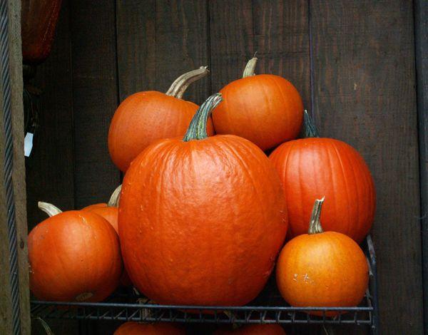 Pots and Pumpkins…..