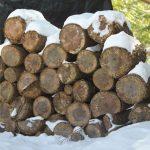 Comfort of Wood Piles…..