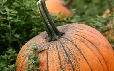 Visual pleasures of Fall…..