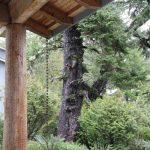 Adzed timbers at the Wickaninnish Inn…..