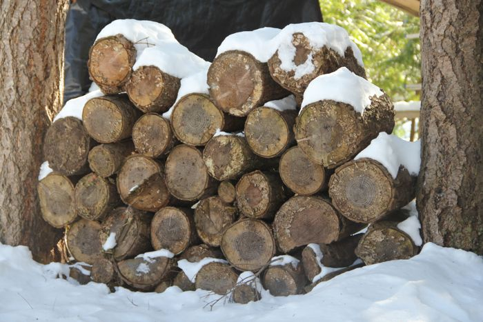Comfort of Wood Piles…..