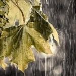 November Rain…..
